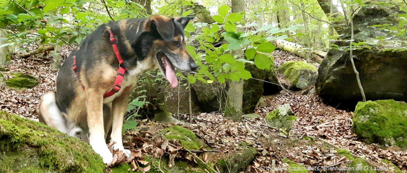 bayerischer-wald-ferienhaus-mit-hund-bayern-hundefreundliche-unterkunft