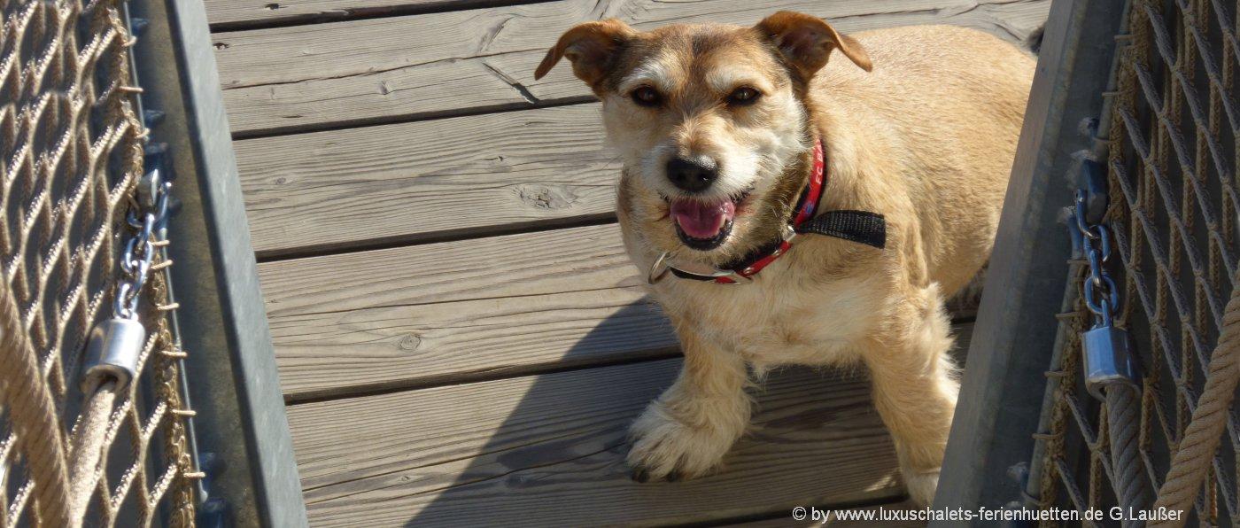 bayerischer-wald-urlaub-hunde-erlaubt-ferienhuetten