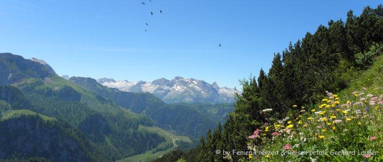 Berchtesgadener Land Chalets und Hütten für Natururlaub Bergwiese