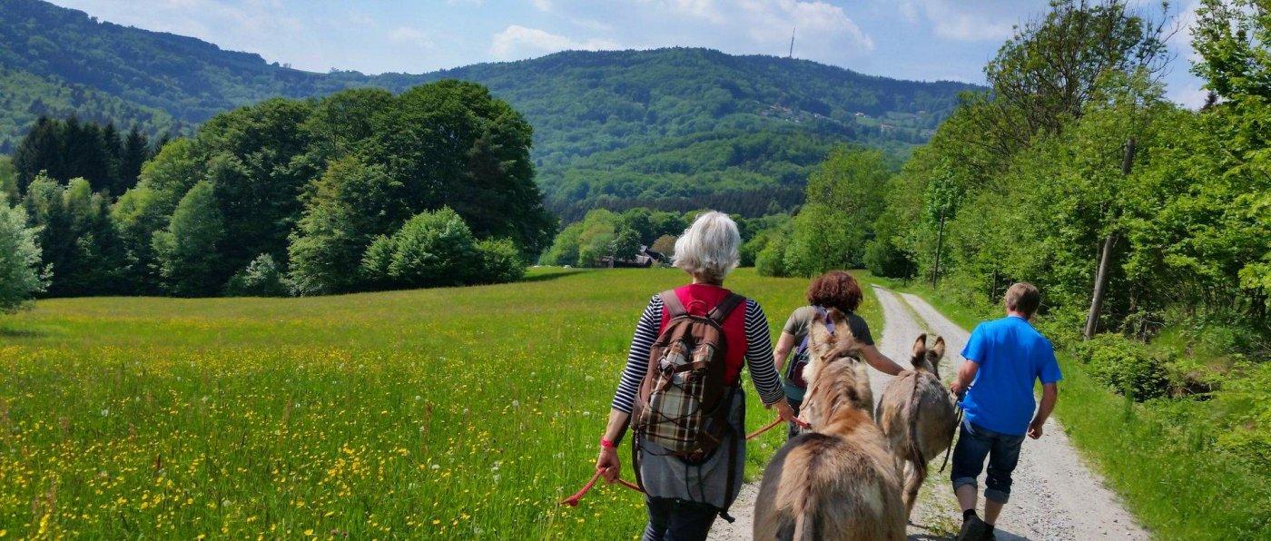eselhof-bayerischer-wald-eselwanderungen-mit-übernachtung-niederbayern