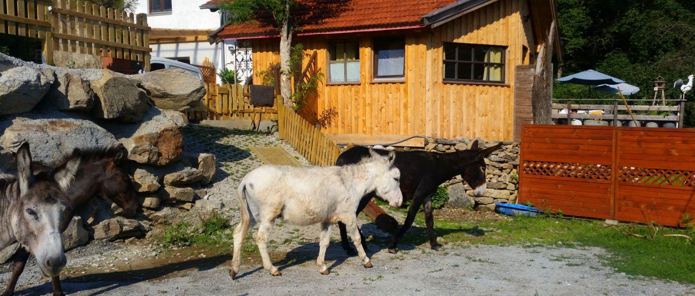 eselhof-bayern-tiny-house-bayerischer-wald-huette-übernachtung