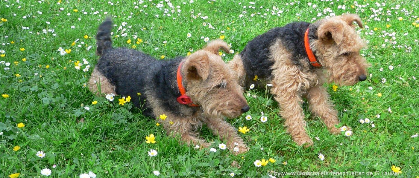ferienhüetten-urlaub-hunde-willkommen-bayerischer-wald-haustiere-erlaubt