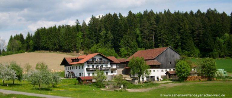 hackerhof-bayerischer-wald-bauernhof-mit-halbpension-deutschland-hofansicht