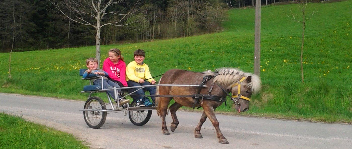 hackerhof-kinder-familienbauernhof-bayerischer-wald-reiterferien