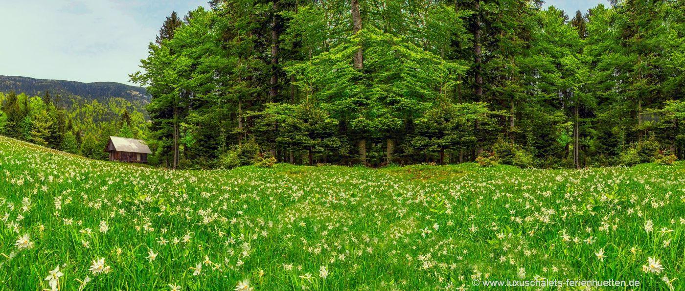 hüttenurlaub-bayern-abgelegene-waldhütte-einsames-ferienhaus