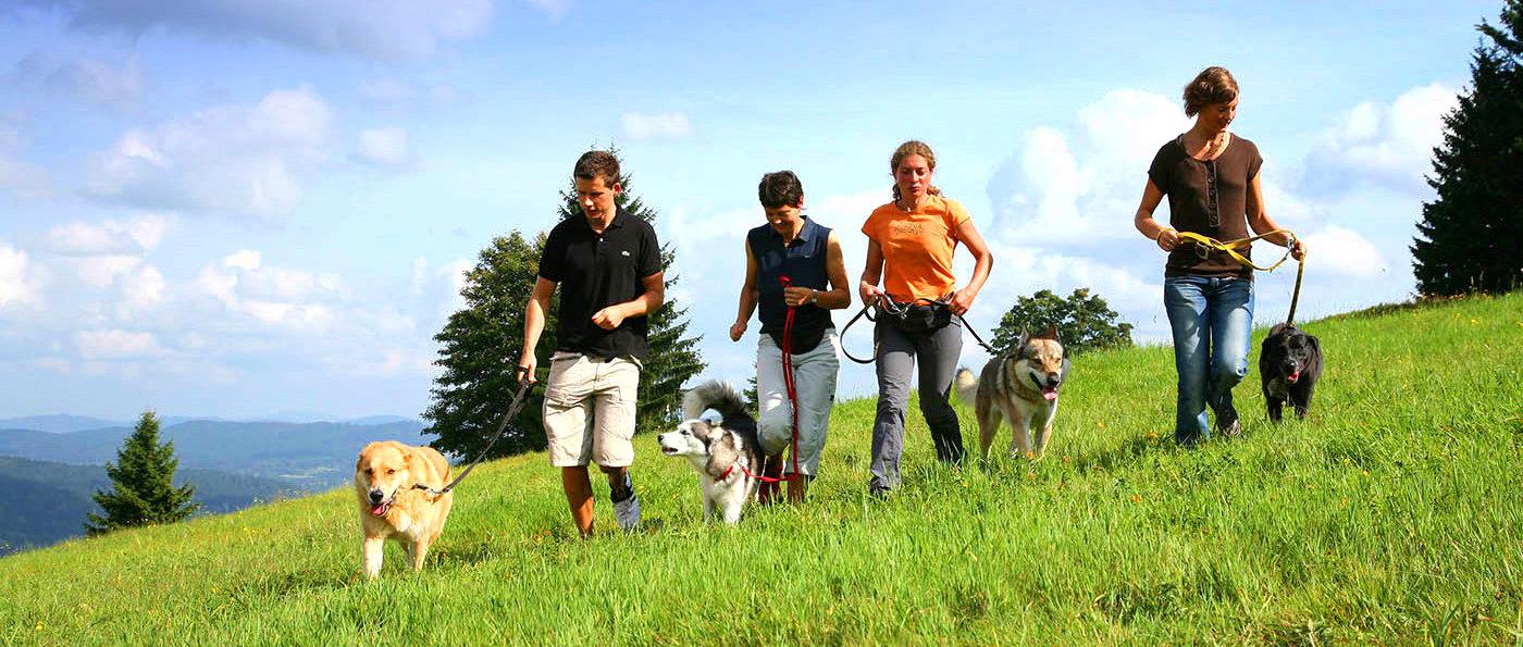 Hndehotel und Familienhotel Bayerischer Wald mit Hundetraining