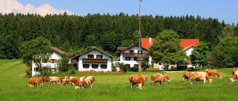 wieshof-bayerischer-wald-bauernhofurlaub-bayern-ferienhaus-ansicht